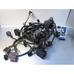 Cableado ZX 636 R 05-06
